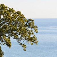 Море, море... :: Елена М