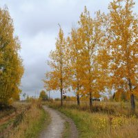 Осень :: Елена Ухта