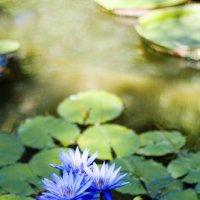 Ботанический сад в Сухуми :: Анастасия Ласская