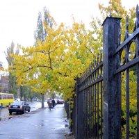 В городе осень :: Алла Губенко