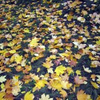 Осенний ковер :: Алла Губенко