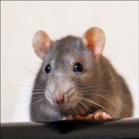...принтер с мышкой.... :: Сергей Долженко