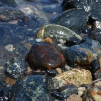Камни гор.... :: Ольга Рябова
