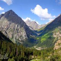 Вид на ущелье Аю-Тор :: Roman Arnold