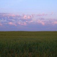 Родные просторы. Вечерняя пшеница. :: Юлия Иванова (Константинова)