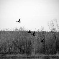 Чёрный ворон :: Натали V