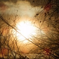 утреннее солнце :: Александра Полякова-Костова