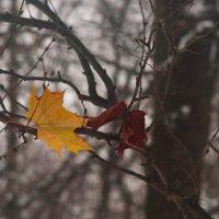 Листья... :: Елизавета Вавилова