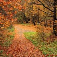 Осень... :: Максим Касем