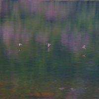 Птички :: Любовь Прудникова