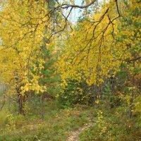 В осеннем лесу :: Елена Перевозникова