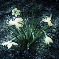Весна... :: Анастасія Грабенко