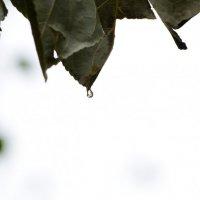 Осень :: Андрей Буханцев