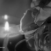 Свадебный букет :: Дарья Норманских