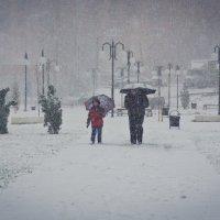 Снег первый :: Илья Целовальников