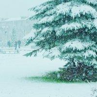 Первый снег :: Илья Целовальников
