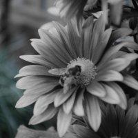 цветок :: Люба Константинова