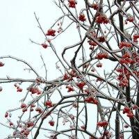 Зима :: Роман Емельянов
