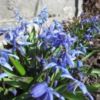 Весна! Точно весна! :: Алла Рыженко