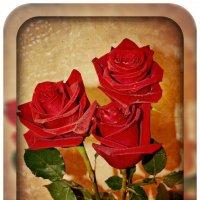 Розы :: Анна S