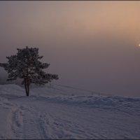 ... студеное утро... :: Наталья Маркова