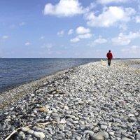 Весенние прогулки вдоль моря :: Константин Николаенко