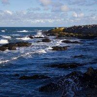 У берегов ирландского моря :: Regina Kurochkina