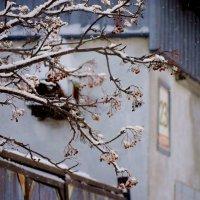 первый снег :: Светлана Абатурова