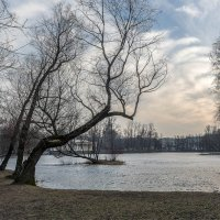 Природа ждет пробуждения :: Алексей Кудрявцев
