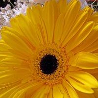Цветок в праздничном букете :: Павел Зюзин