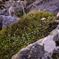 весенний мох 2 :: Dmitry R.