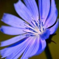 Я,цветок :: Иван Сагиров