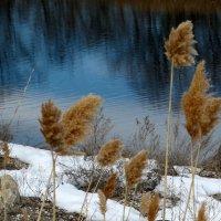 Краски ранней весны :: anna borisova