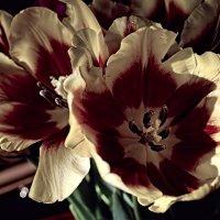 Тюльпаны :: Лидия Цапко