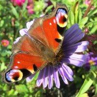 бабочка :: Андрей Москвинов