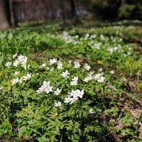 цветы :: Анжела Искандярова