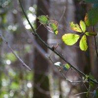 Весеннее солнце в лесу :: baba-yaga-paris Наталья Кр.