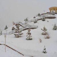 Зимний парк :: Андрей Гомонов
