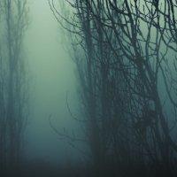 """""""Туман"""" :: Julia Demchenko"""
