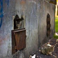 Кошкин дом :: Дмитрий Савченко