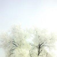 Последнии дни зимы :: Andrey Dikiy