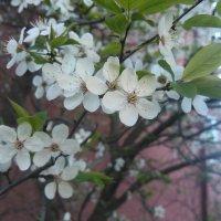 весна :: Андрей Москвинов