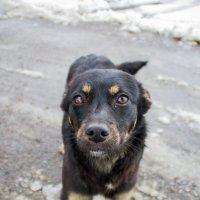 The doggy :: Николай Долгополов