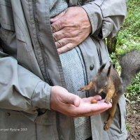 Люди бывают полезным дополнением к орехам :: Дмитрий Ерохин