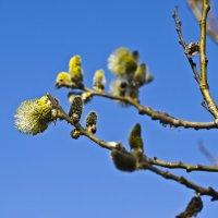 Весна... :: Artyom S