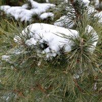 Снег 10 марта :: Александр