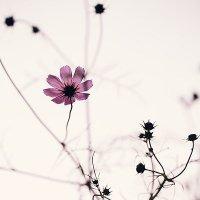 Цветок :: Маруся Михайлова