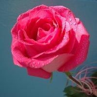 роза :: александра стаднюк