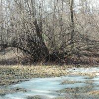 Сокольники. 14.03.2014 г. :: Геннадий Александрович