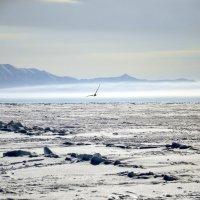 Ледяная пустыня :: Михаил Сахнов